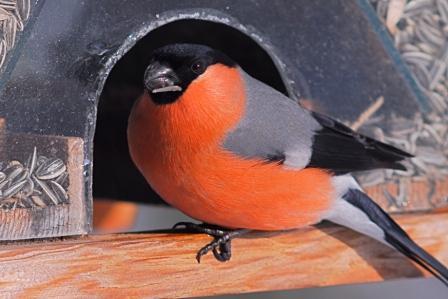 berichte zum vogelschutz